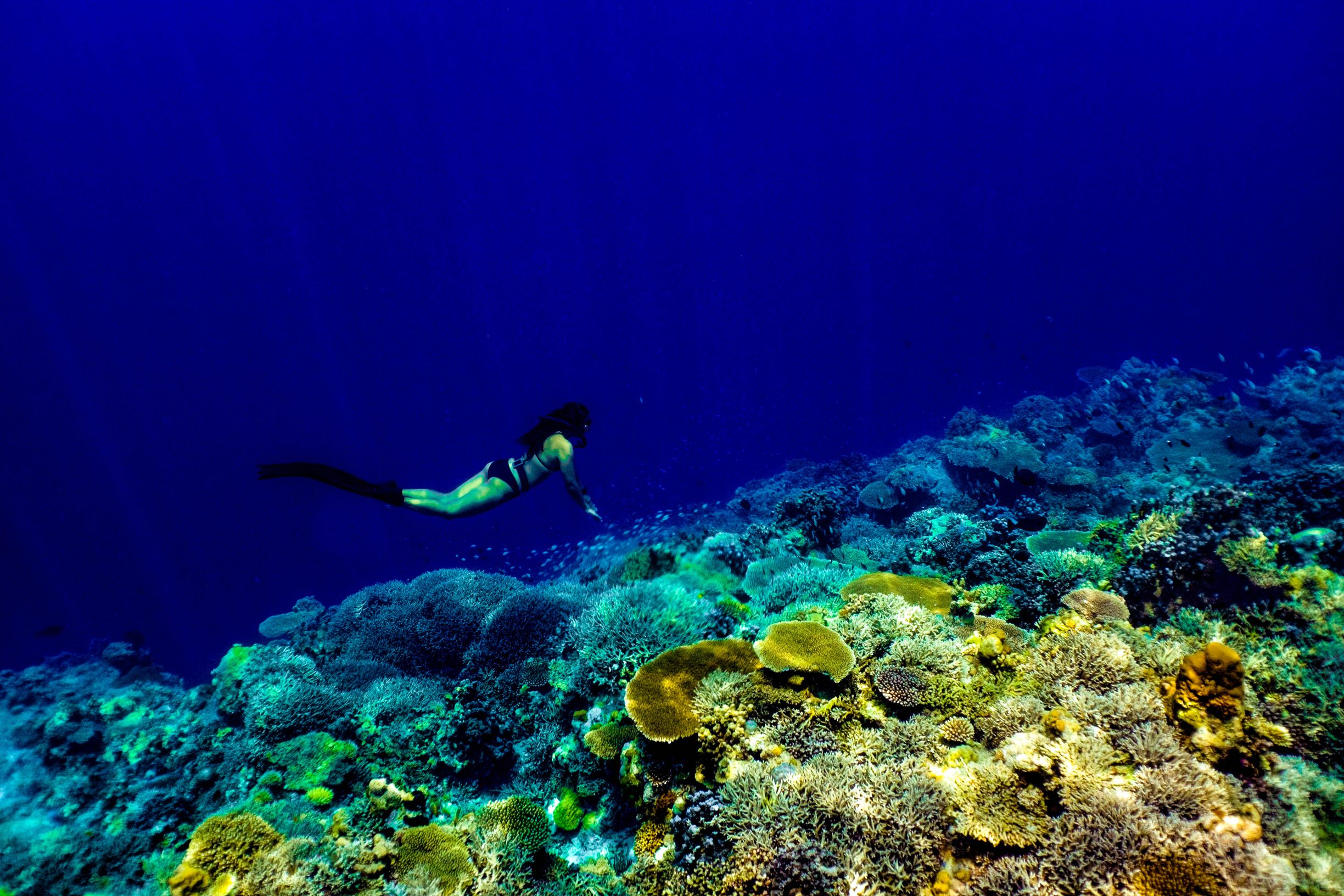 Woman freediving over colorful coral formations in Apo Reef, Occidental Mindoro, Philippines