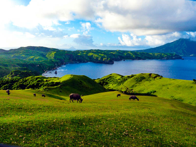 Cattle grazing on rolling green hills beside the sea under a cloudy sky in Batanes, Philippines