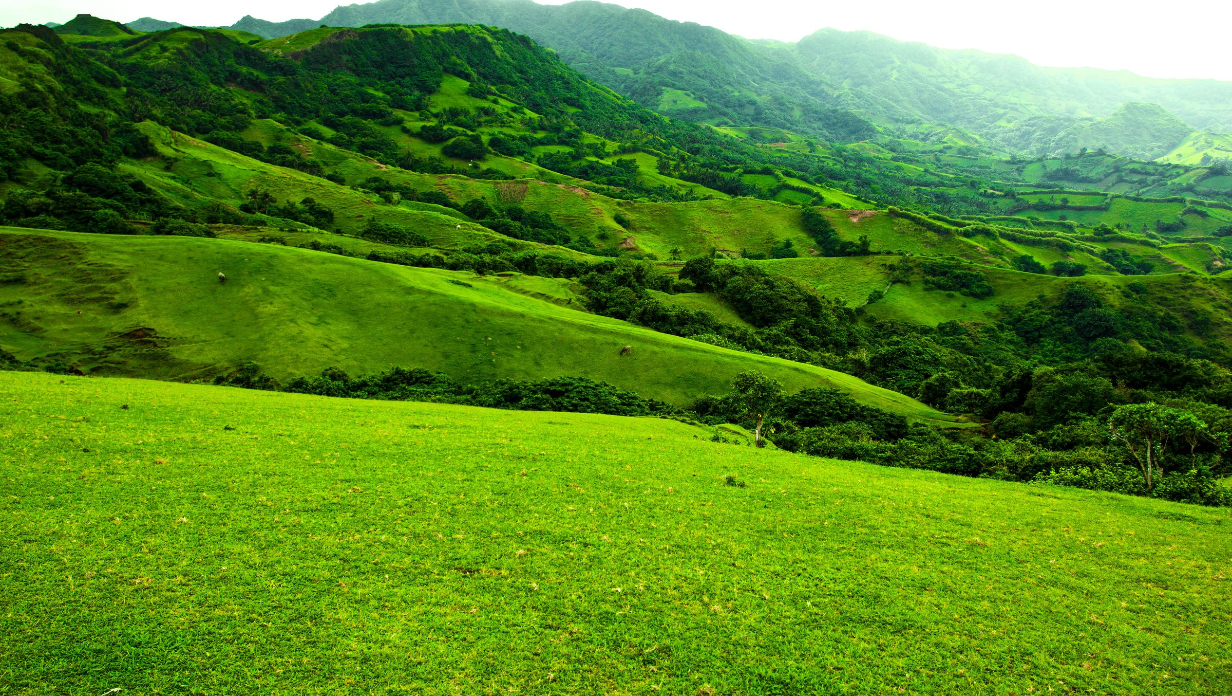 Green rolling hills in Batanes, Philippines