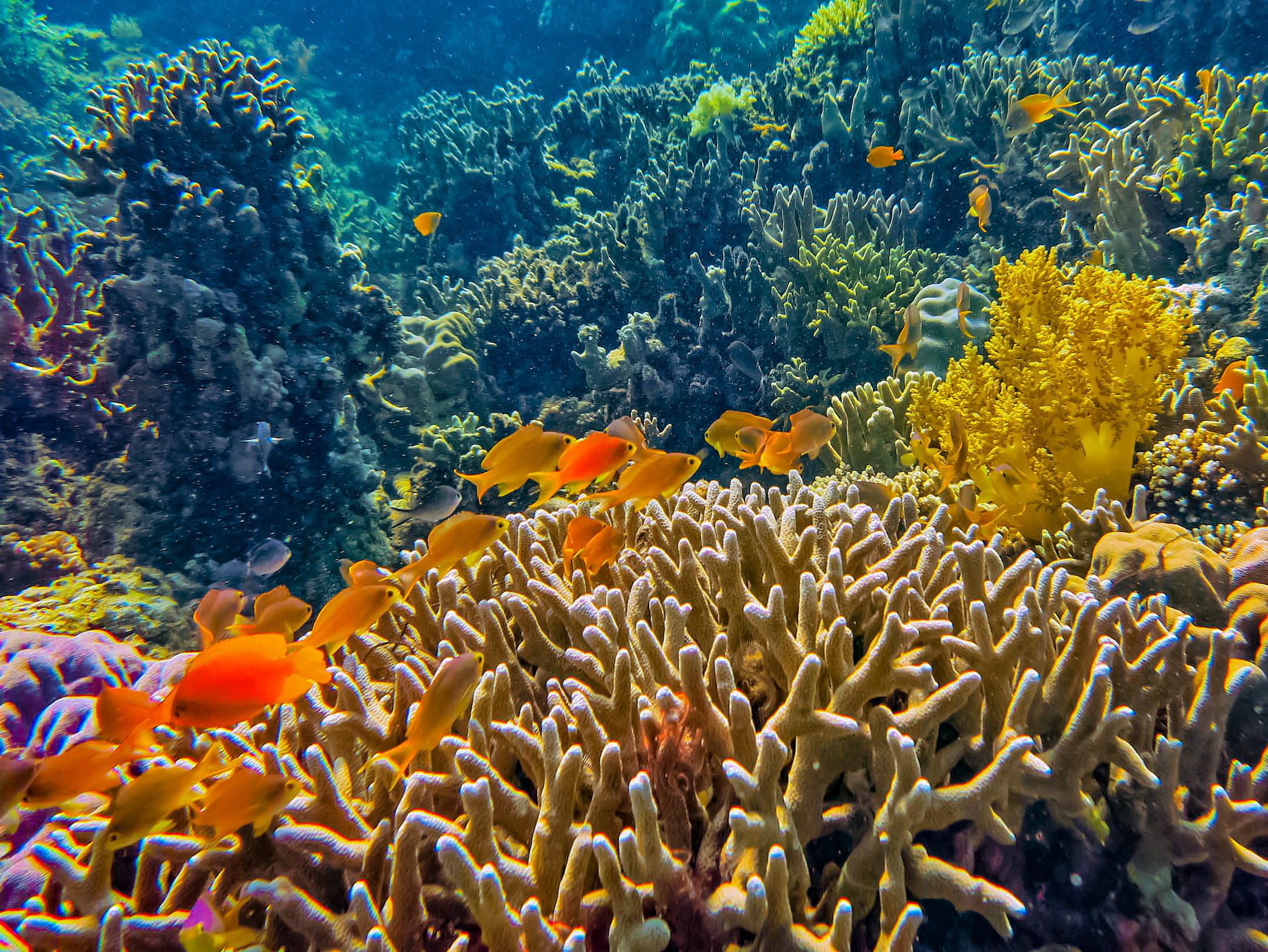 Colorful coral reef with numerous colorful tropical reef fishes in Philippine waters