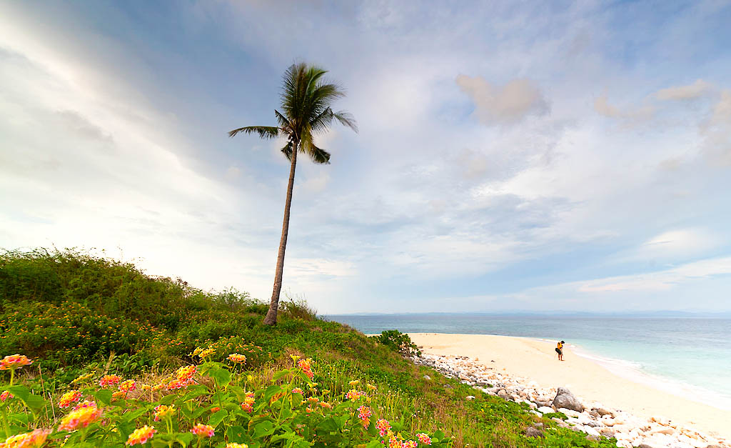 Lone palm tree on a low knoll with grass and flowers overlooking a white sand beach in Dasol, Philippines