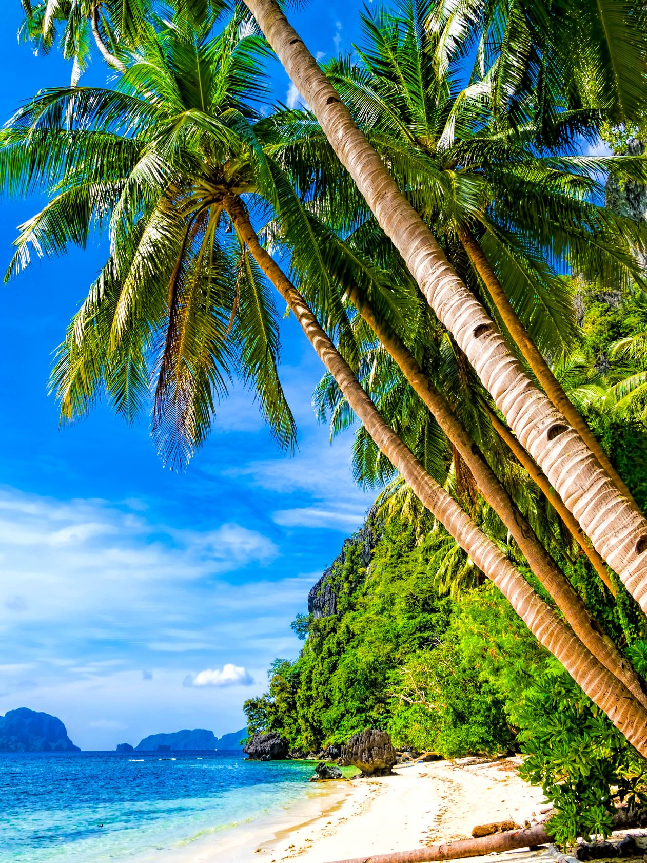 Coconut palms leaning over a white sand beach fronting blue waters with green mountains in the distance in El Nido, Palawan, Philippines