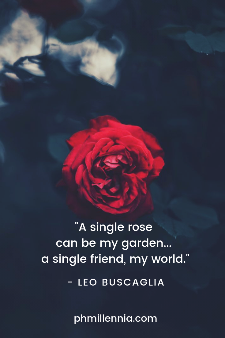 A single red rose on a field of black.
