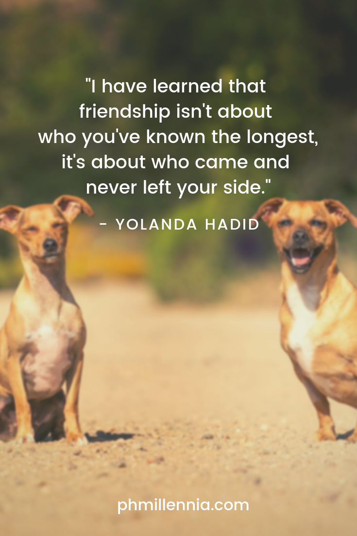 A quote on friendship by Yolanda Hadid on a background of two brown dogs seemingly smiling to the camera.