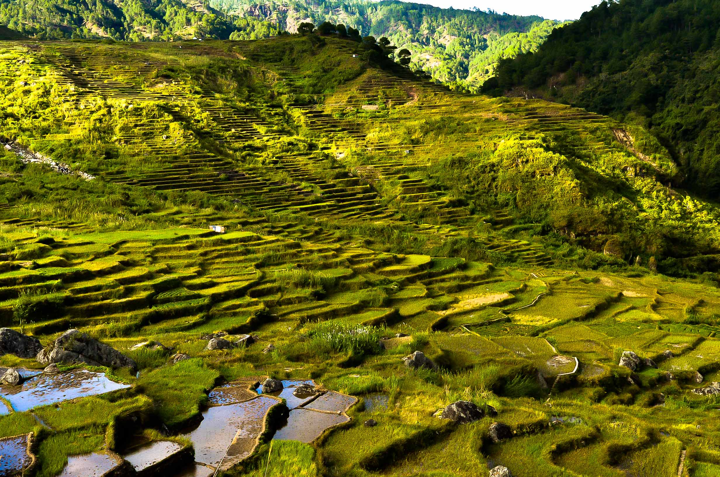 Sunlight shines on green terraces paddy fields of the KIlong Rice Terraces in Sagada, Philippines