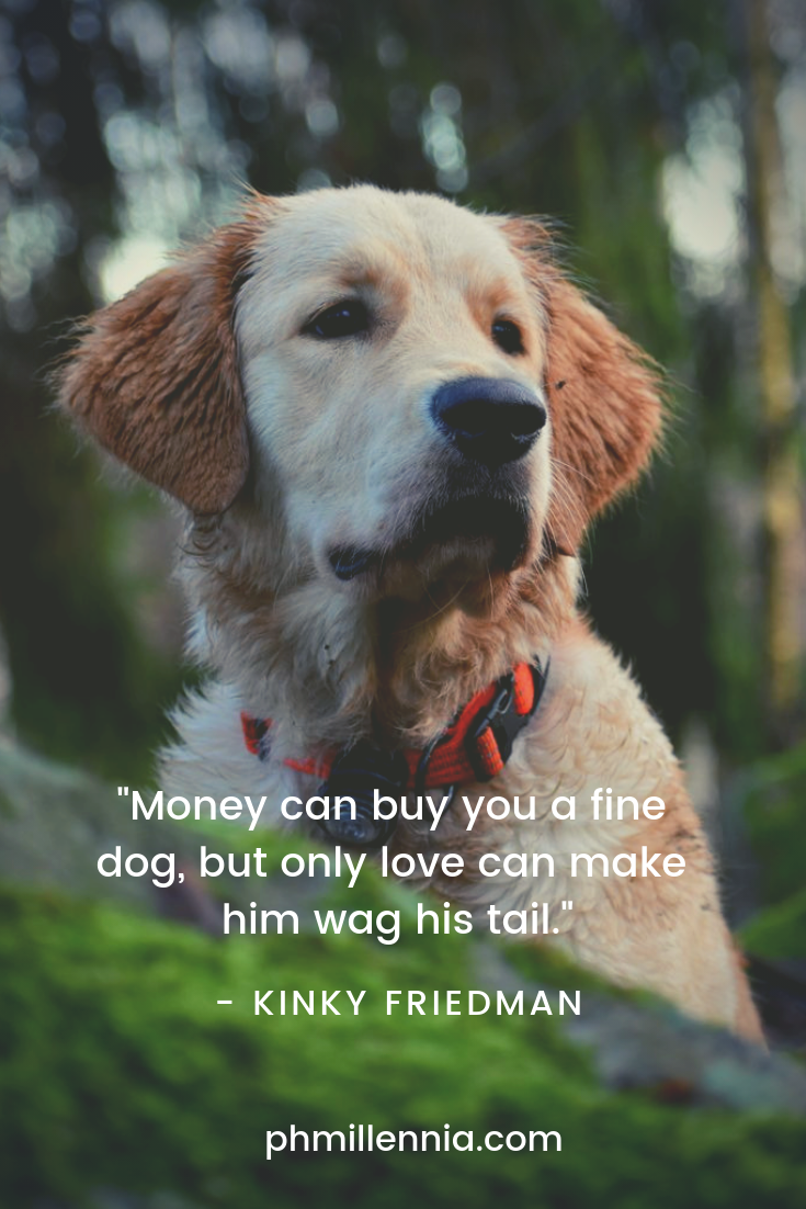A quote on love by Kinky Friedman on an image of an adorable Golden Retriever.