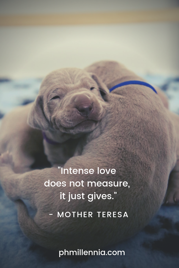 A quote on love by Mother Teresa on an image of a pair of cute puppies cuddling together.