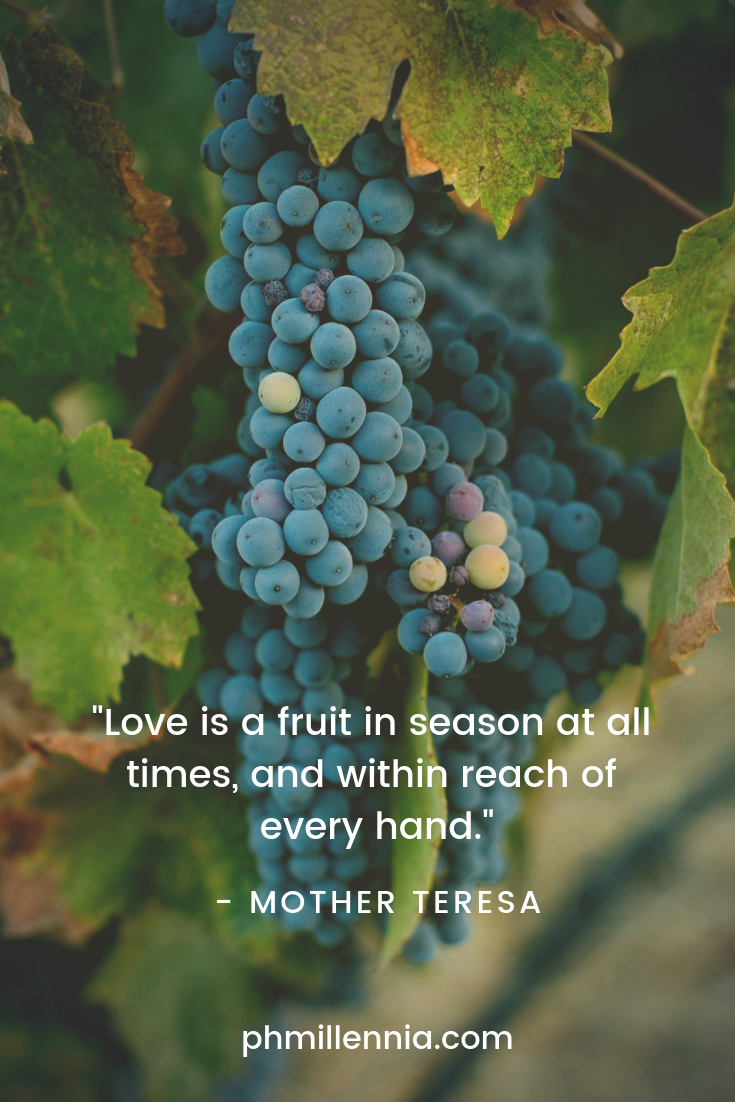 A quote on love by Mother Teresa on an image of a hanging bunch of ripe grapes.