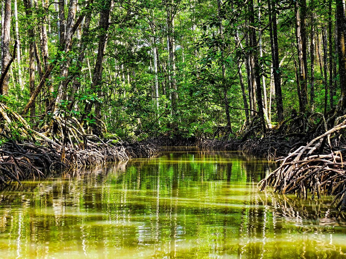 Mangrove Swamp in Puerto Princesa, one of the most amazing places to visit in the Philippines