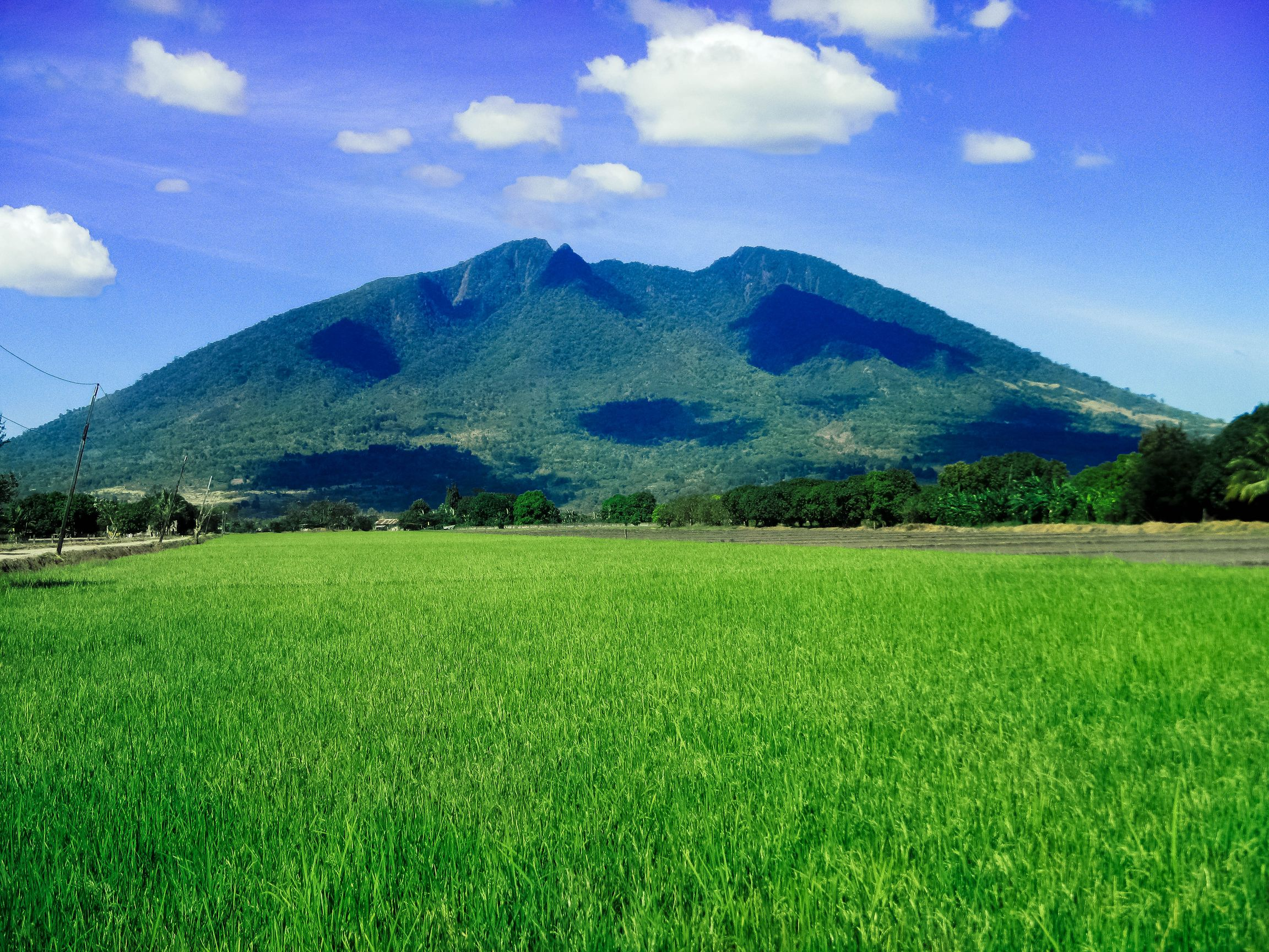 Green rice fields beyond which looms Mount Arayat beneath a blue sky with several masses of clouds in Philippines