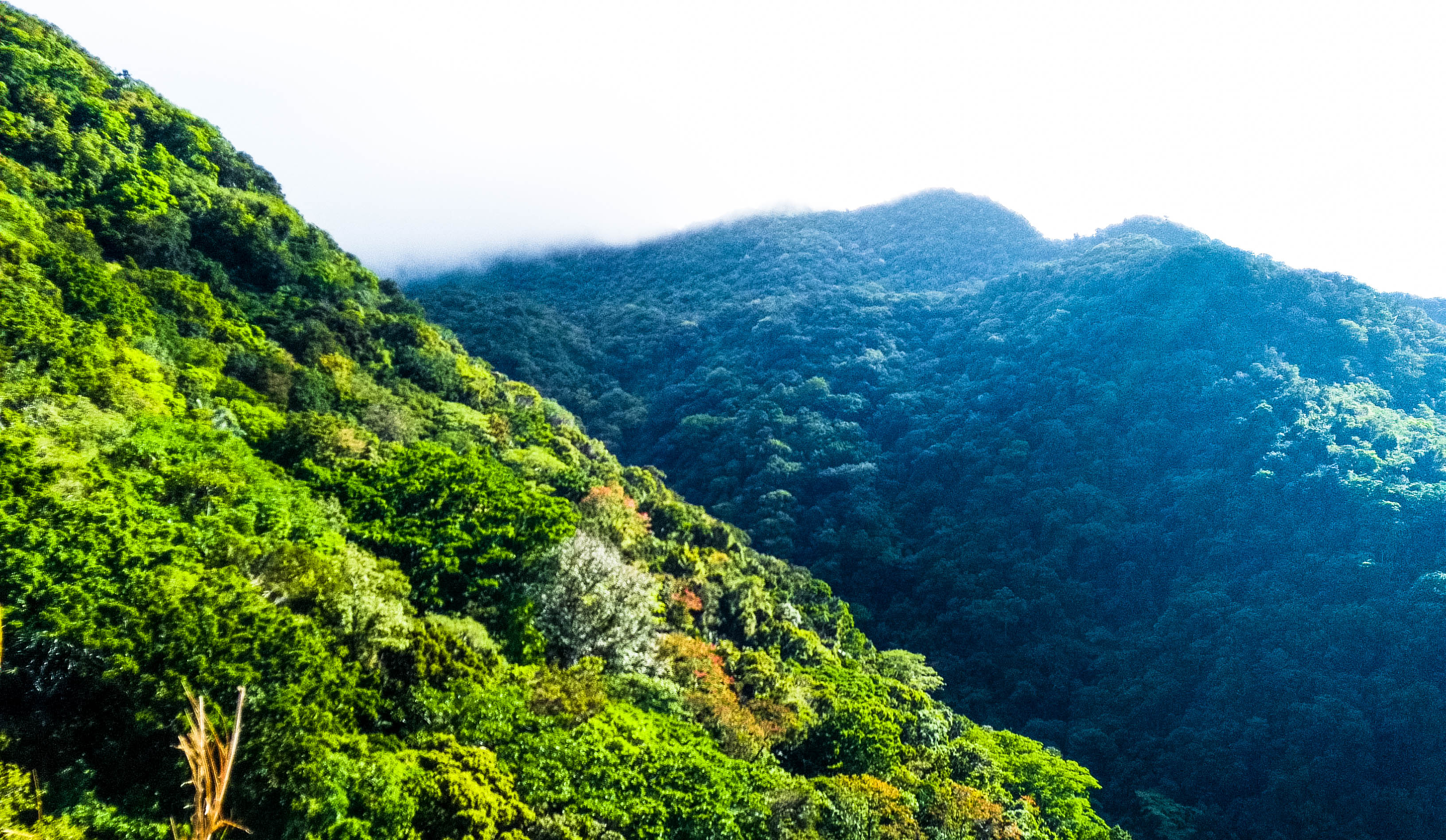 Viewof Mount Makiling, Philippines from its forest-clad slopes,