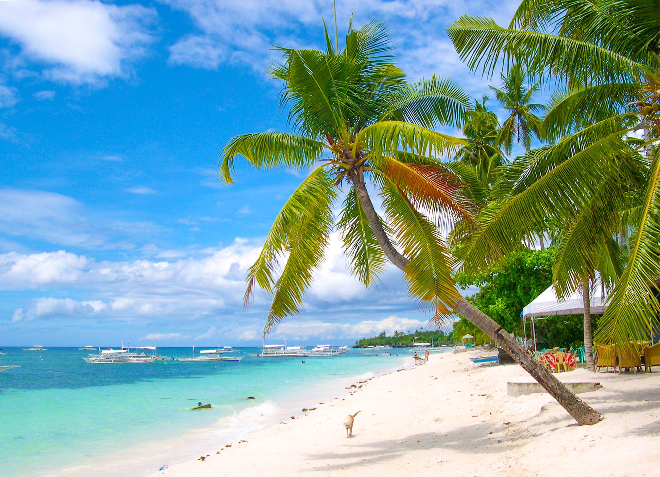 Coconut palm trees leaning over a white sand beach fronting blue and turquoise waters with numerous boats in anchor in Panglao, Philippines