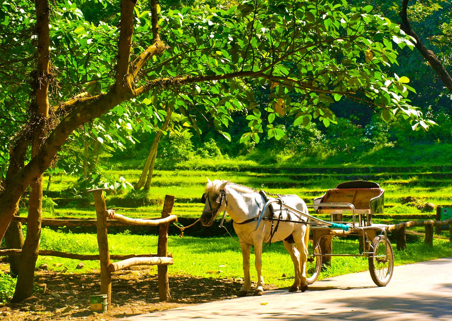 A makeshift horse-drawn cart parked on a road beneath a tree and beside a fence