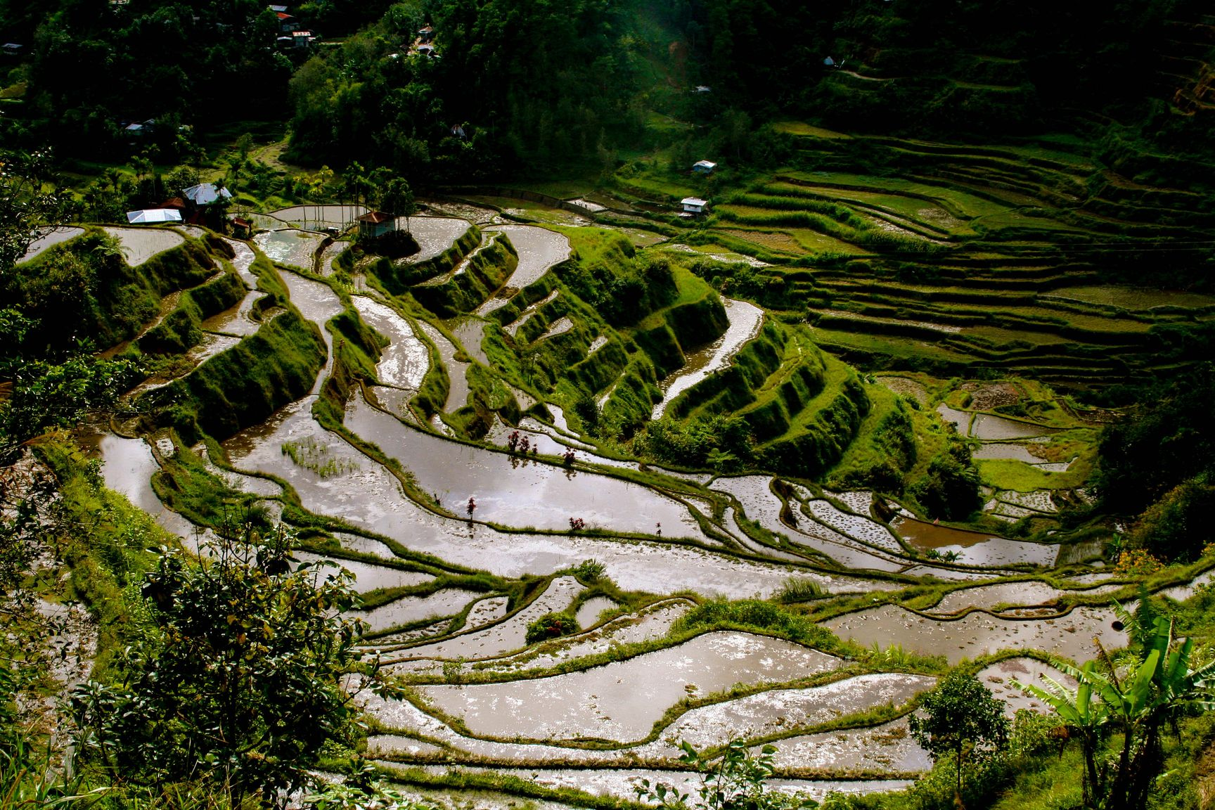 Top view of terraced paddy fields carved along mountainsides in Ifugao, Philippines