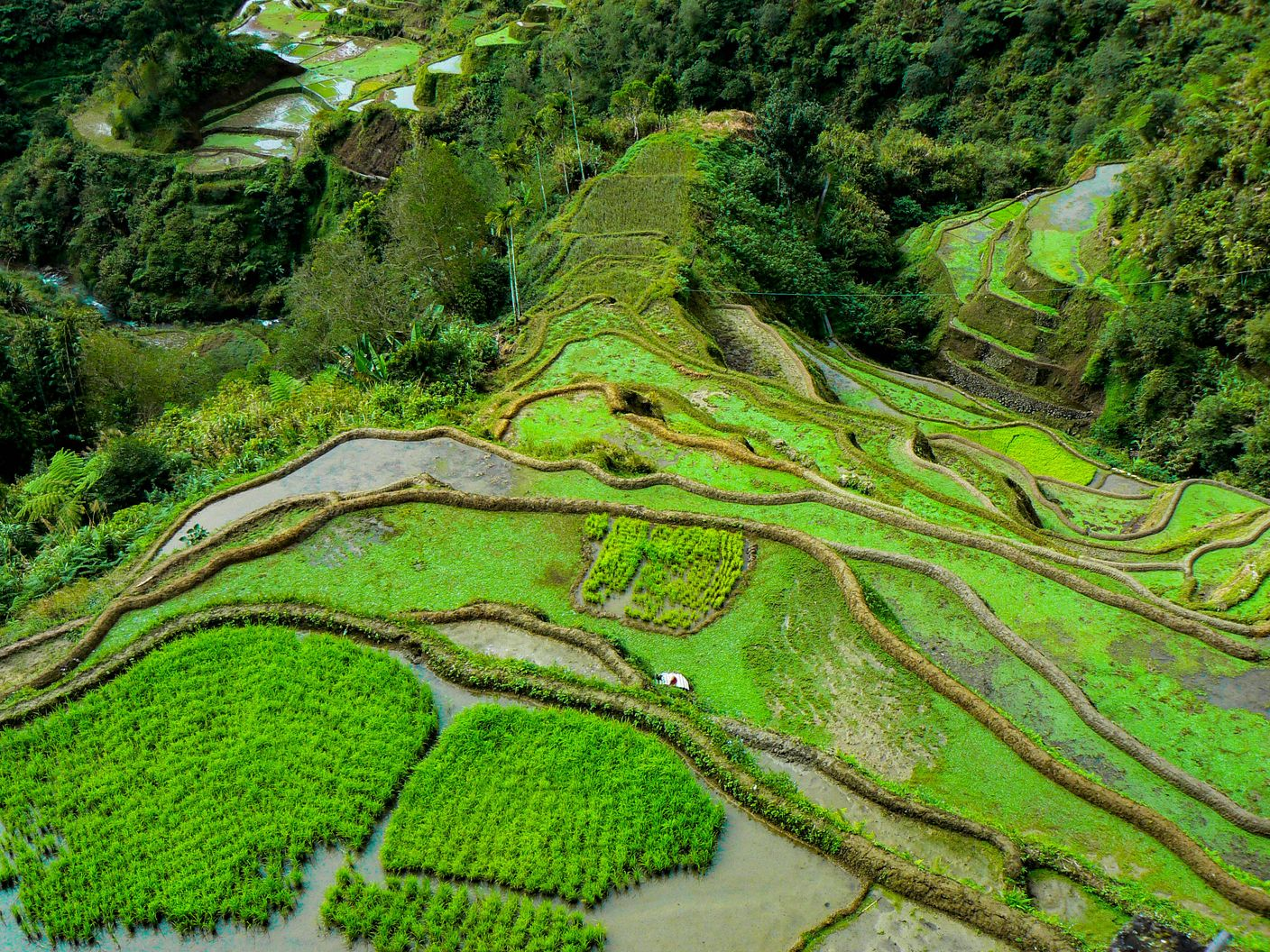 Aerial view of terraced paddy fields carved along mountainsides in Ifugao, Philippines