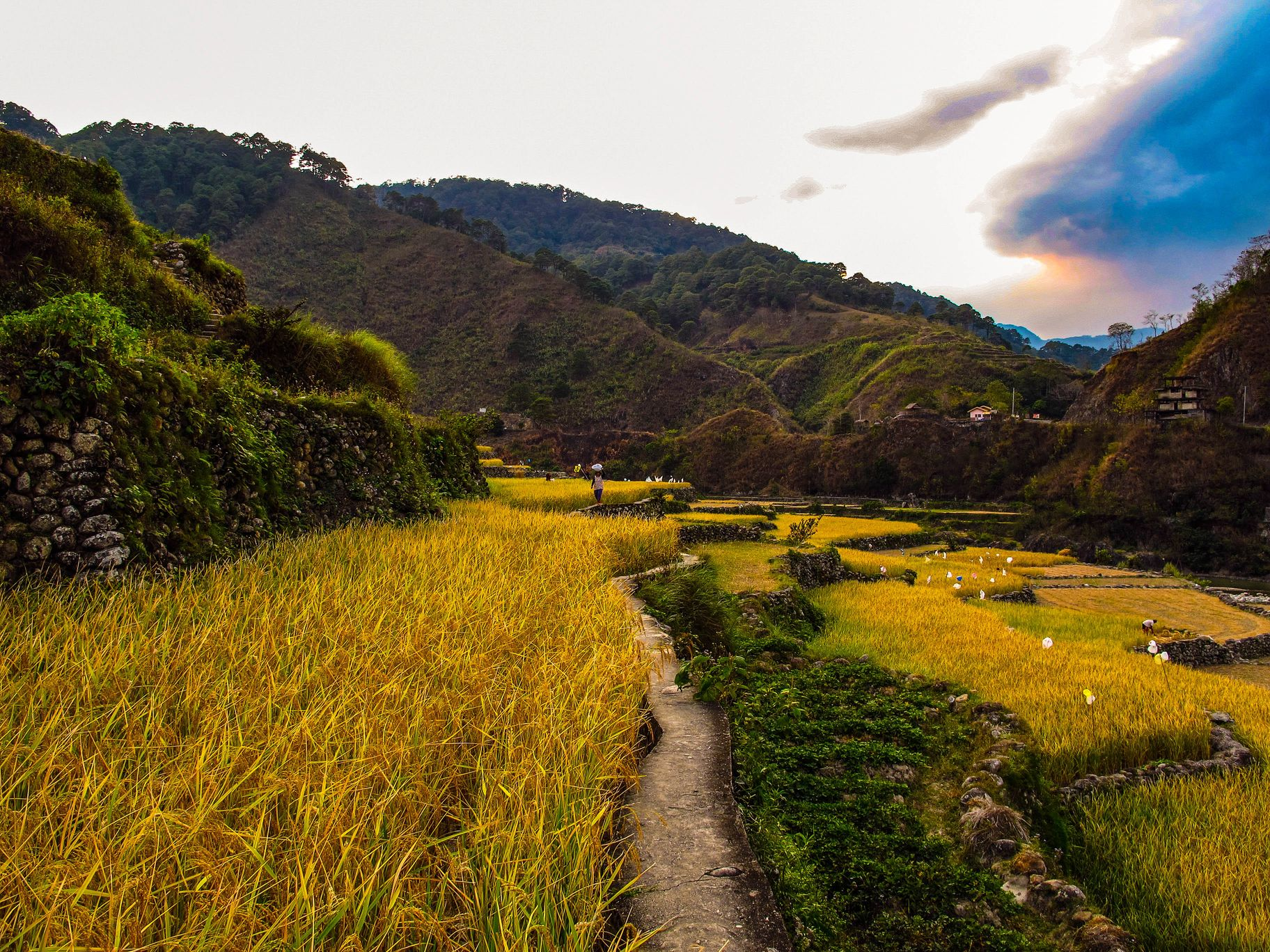 View of narrow pathways running through terraced paddy fields carved along mountainsides in Ifugao, Philippines