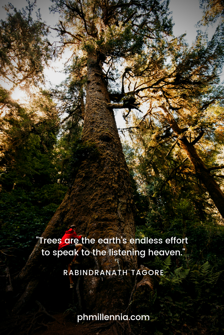 A quote on nature by Rabindranath Tagore on a background of a man trying to climb a very tall tree