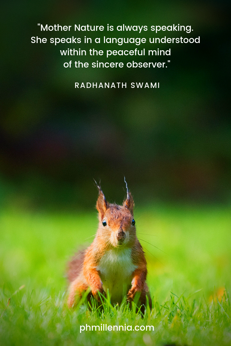 A quote on nature by Radhanath Swami on a background of a brown squirrel on a grassy field staring into the camera