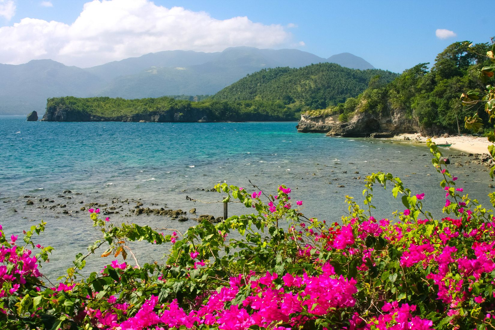 Magenta flowers bloom along a rocky and sandy coast facing turquoise waters