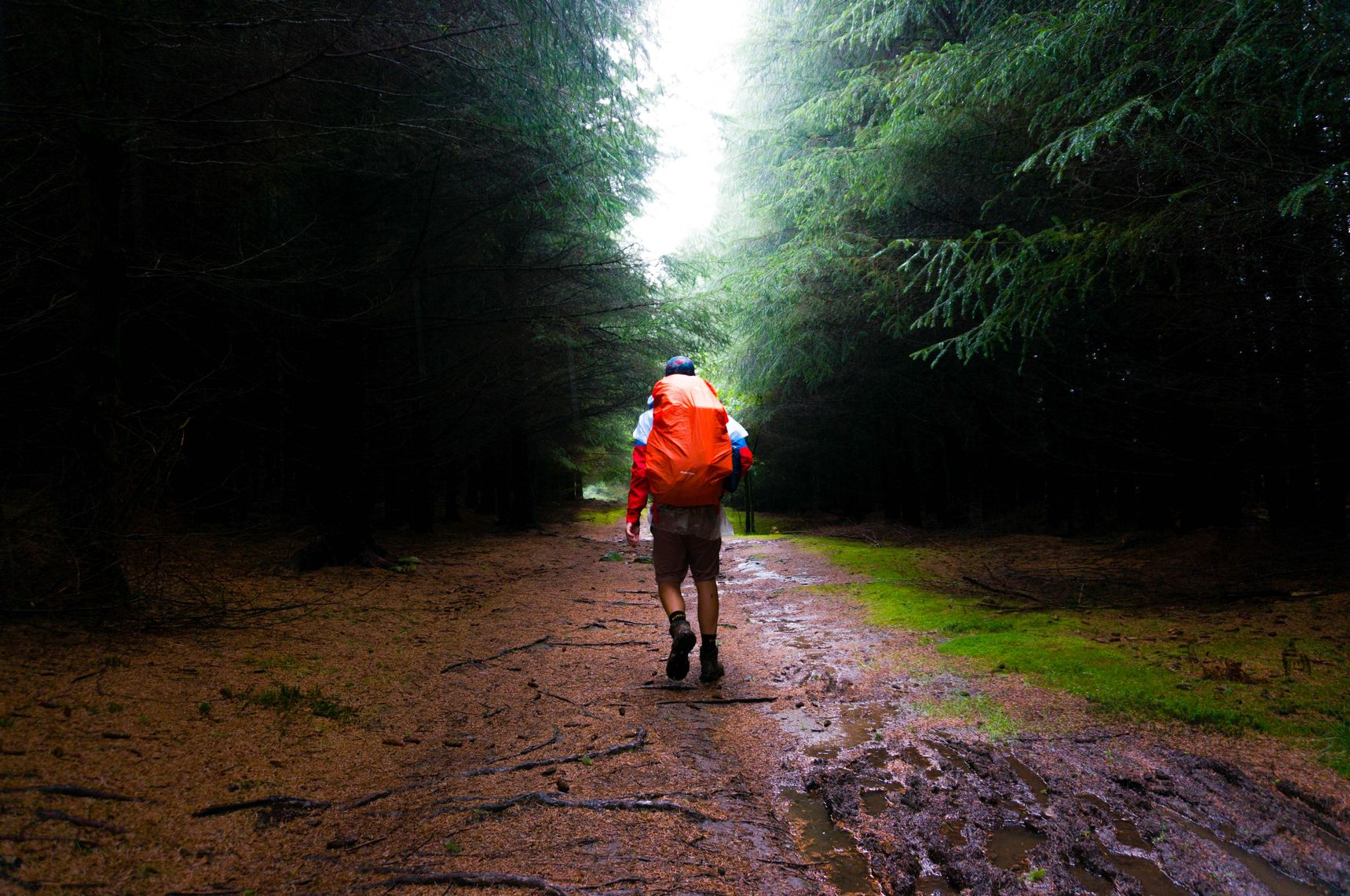 Man with a backpack walking into the forest