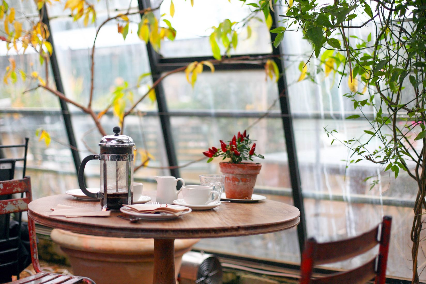 A glass coffee pot, a cup, saucers, napkins, and a potted plant all on a small table with leaves hanging overhead