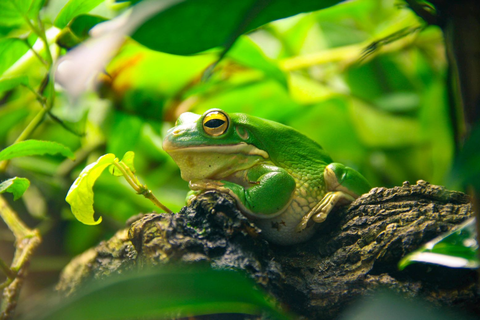 Green frog perched on a truck surrounded by leaves and vegetation