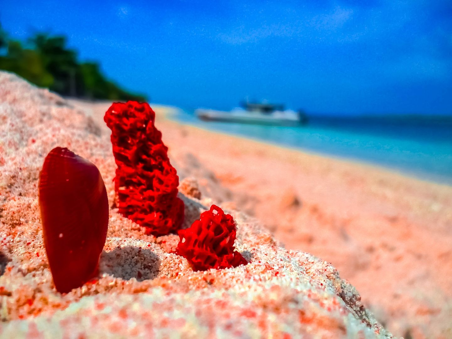 A trio of red organ pipe corals among the pinkish sands of a beach