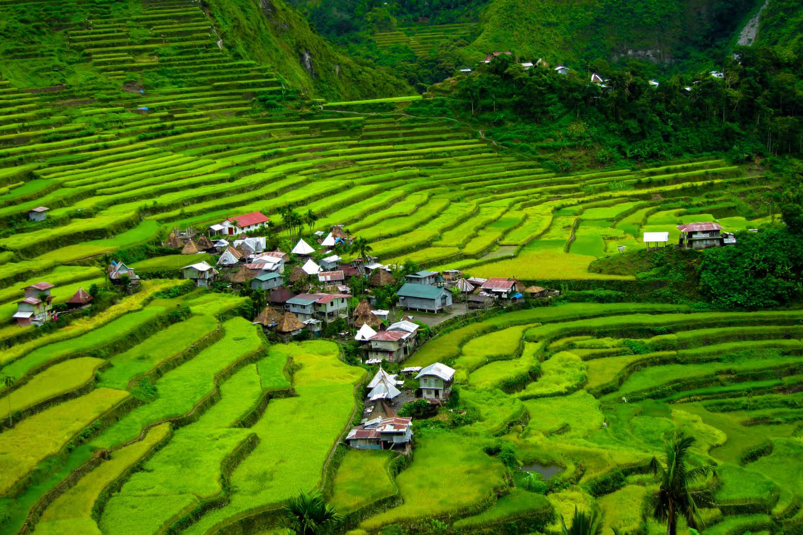 A small village built on green rice terraces carved on a mountainside