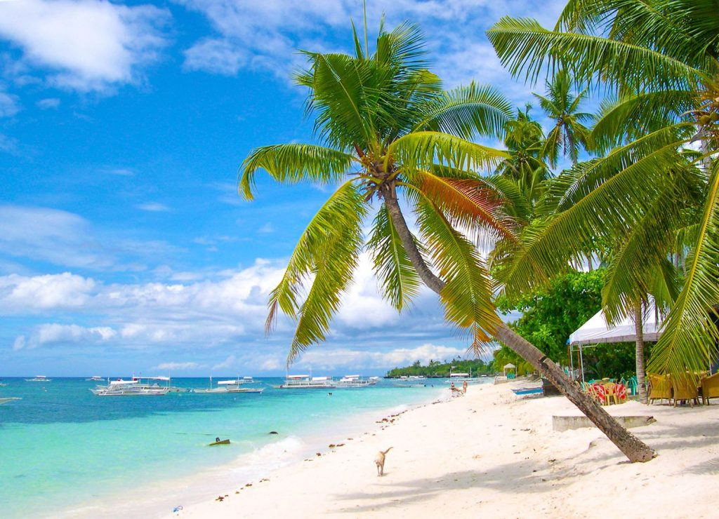 Coconut palms on a white sand beach facing turquoise and blue waters in Panglao Island, one of the best places to visit in the Philippines