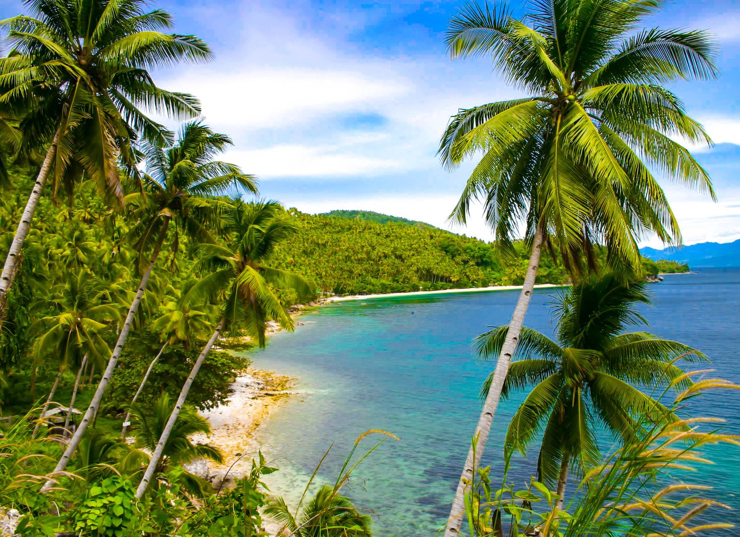 Coconut palm trees on a tropical sandy beach facing waters of turquoise and blue waters in Samal, one of the best places to visit in the Philippines