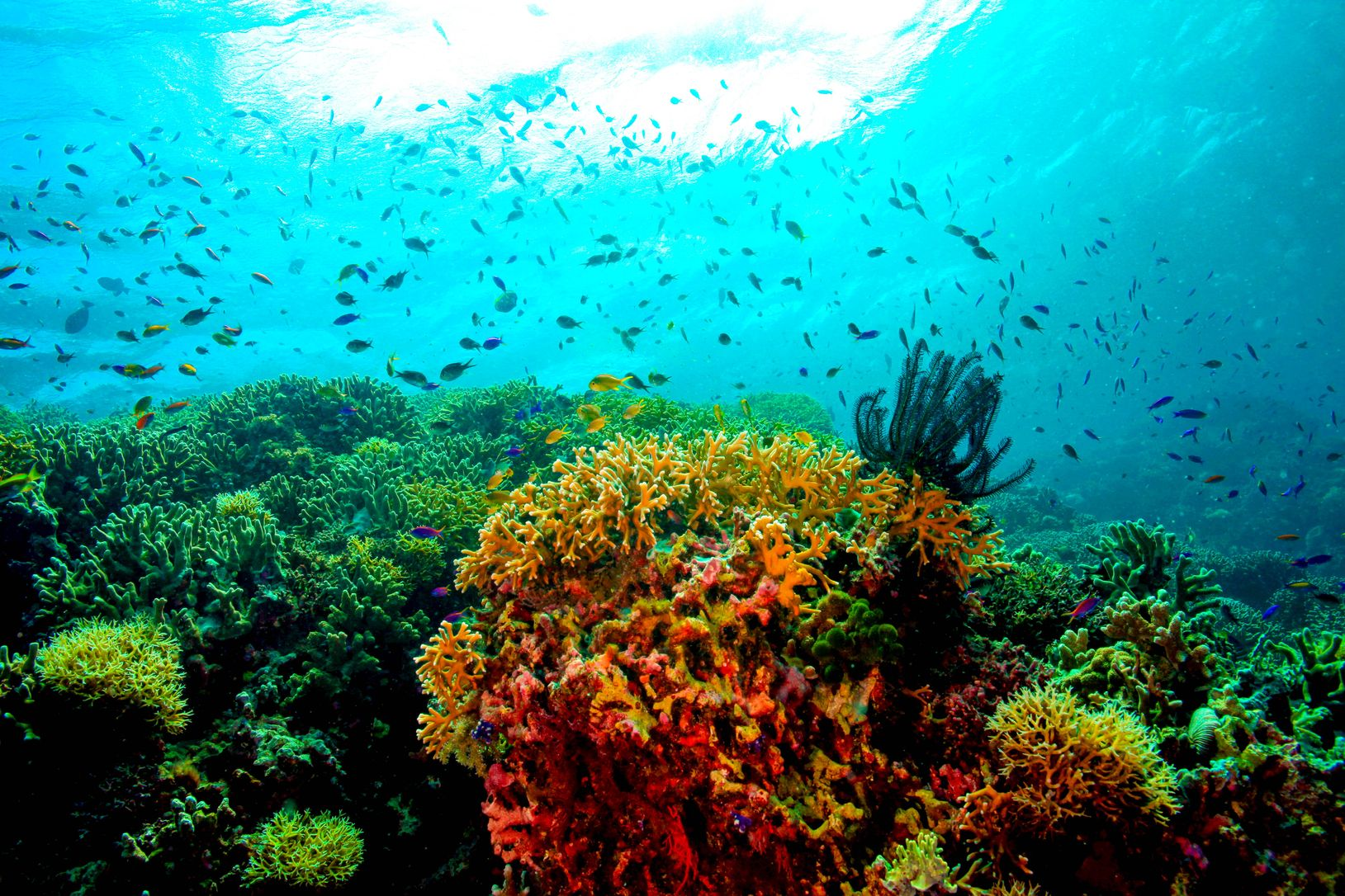 Colorful fishes and coral reefs in Tubbataha Reefs, one of the best places to visit in the Philippines
