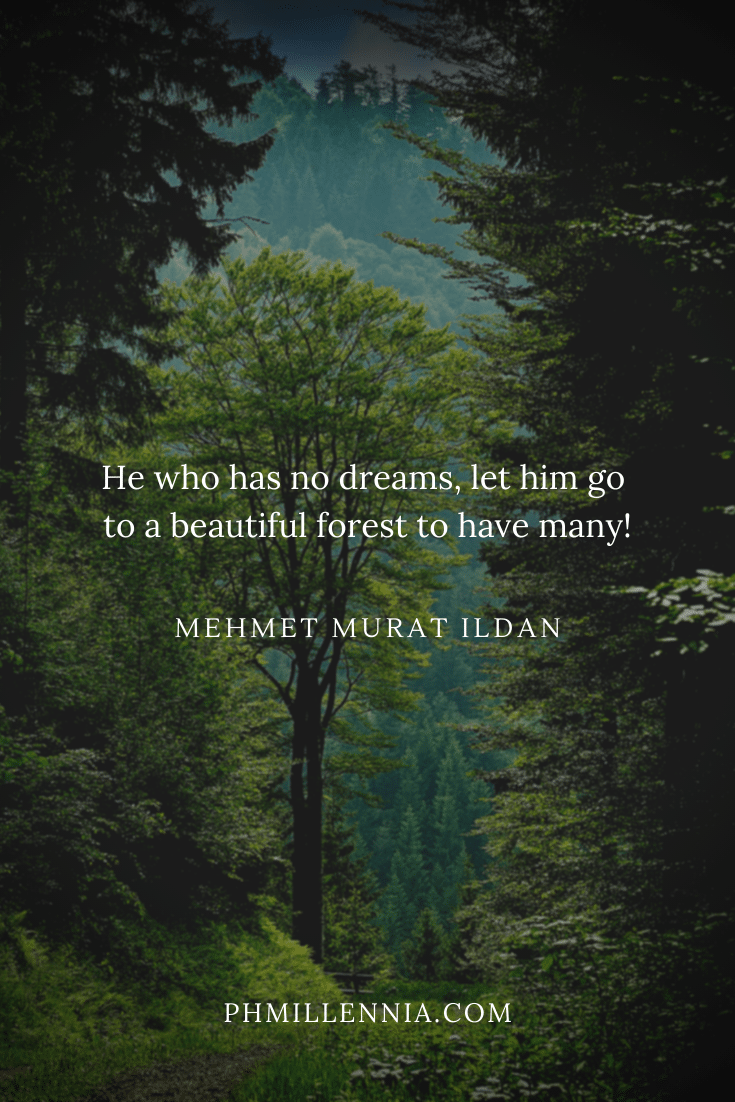 A quote on woods and forests on a background of a green forest