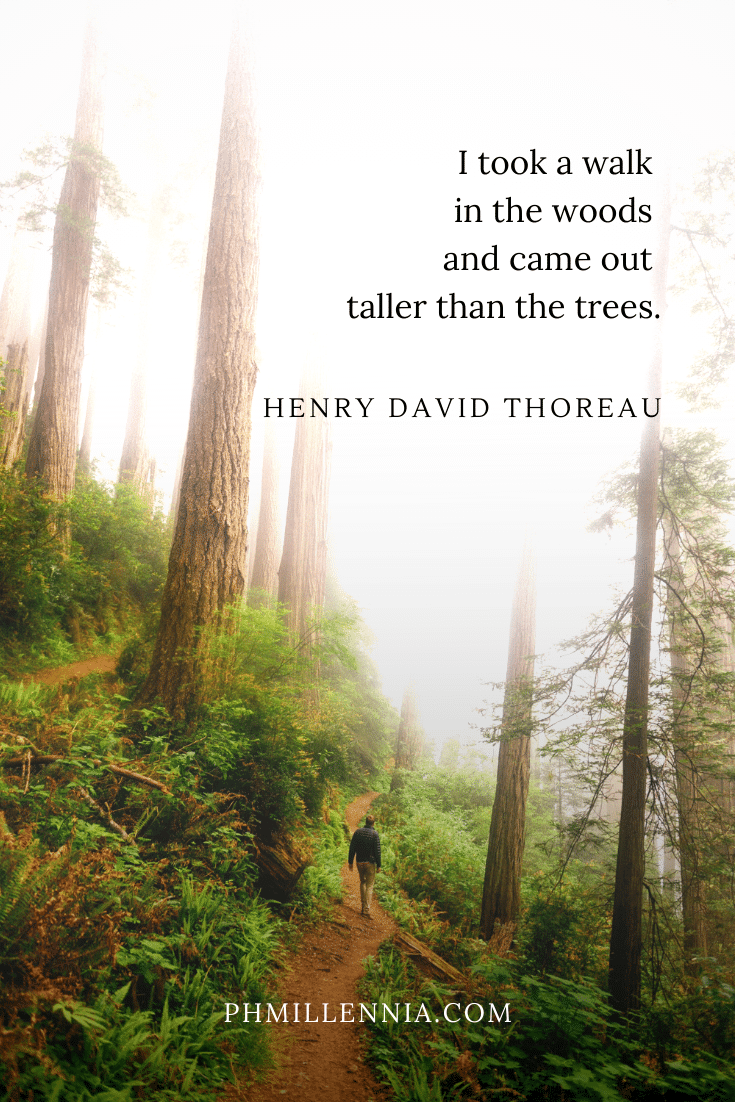 A quote on woods and forests on a background of a man walking through the woods