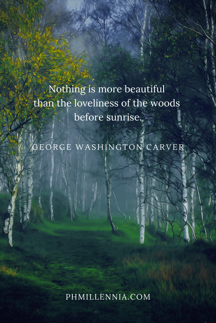 A quote on woods and forests on a background of a foggy birch forest at dawn