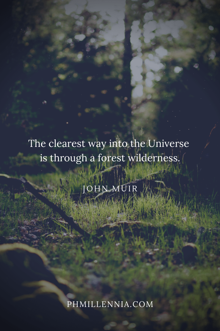 A quote on woods and forests on a background of a forest floor