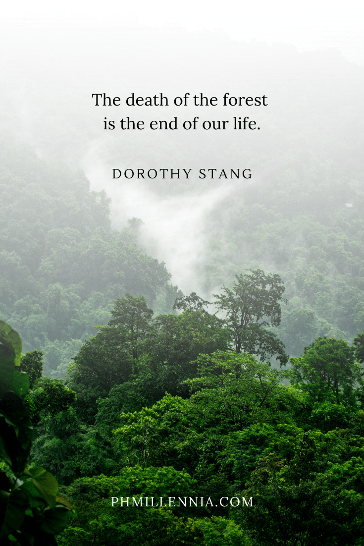 A quote on woods and forests on a background of a steamy tropical rainforest