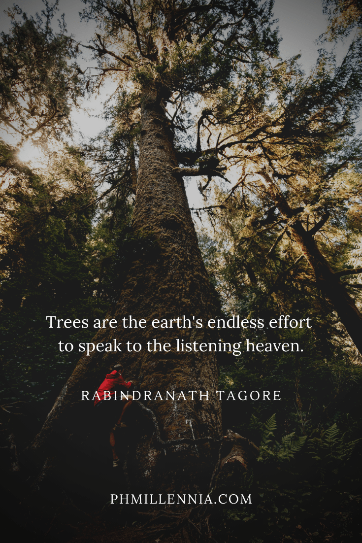 A quote on woods and forests on a background of a man climbing a very tall and broad tree