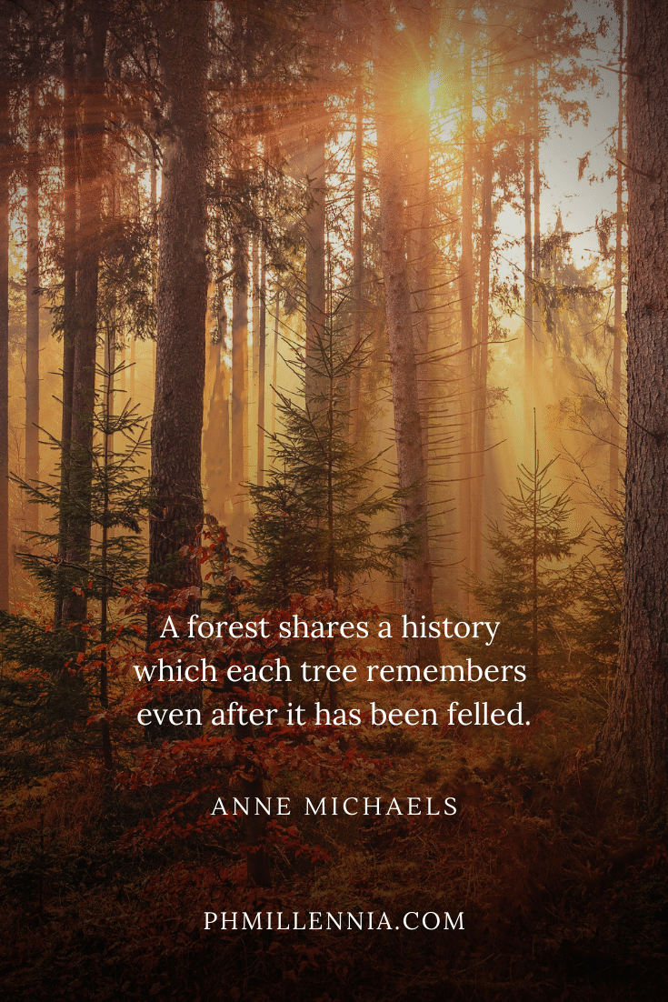One of Anne Michaels' quotes on woods and forests on a background of sunlight filtering through autumn trees