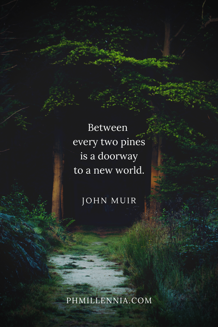 A quote by John Muir on a background of a path leading into dark forest