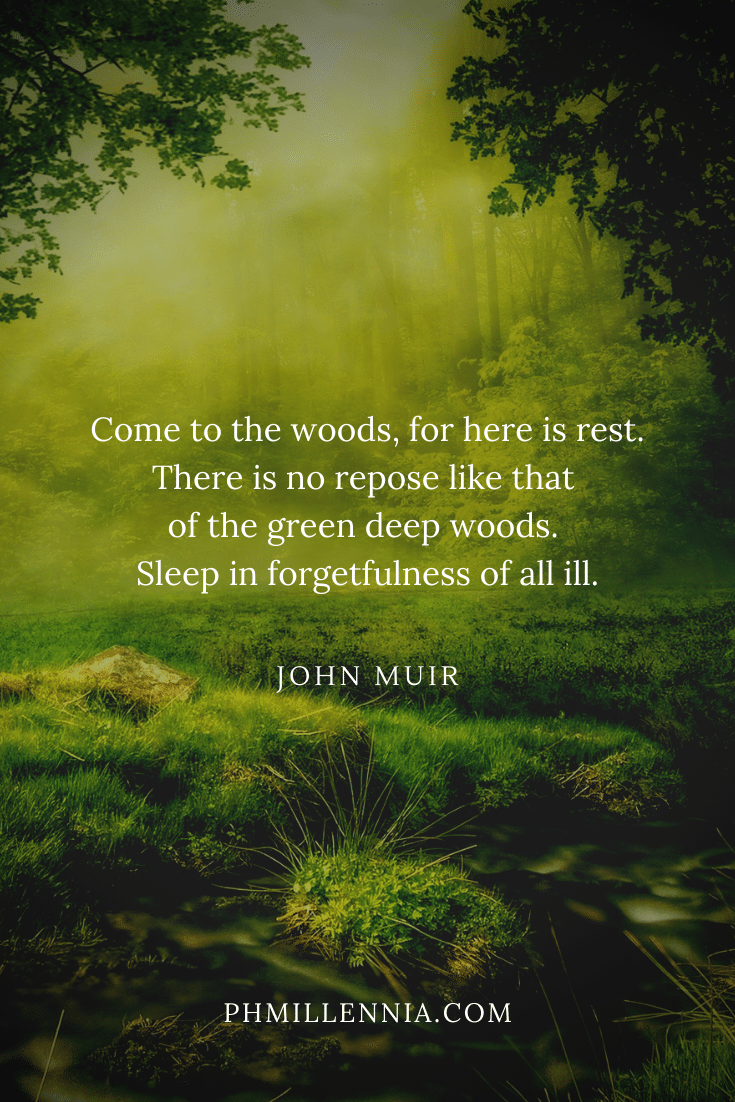 One of John Muir's quotes on woods and forests on a background of a green forest glade