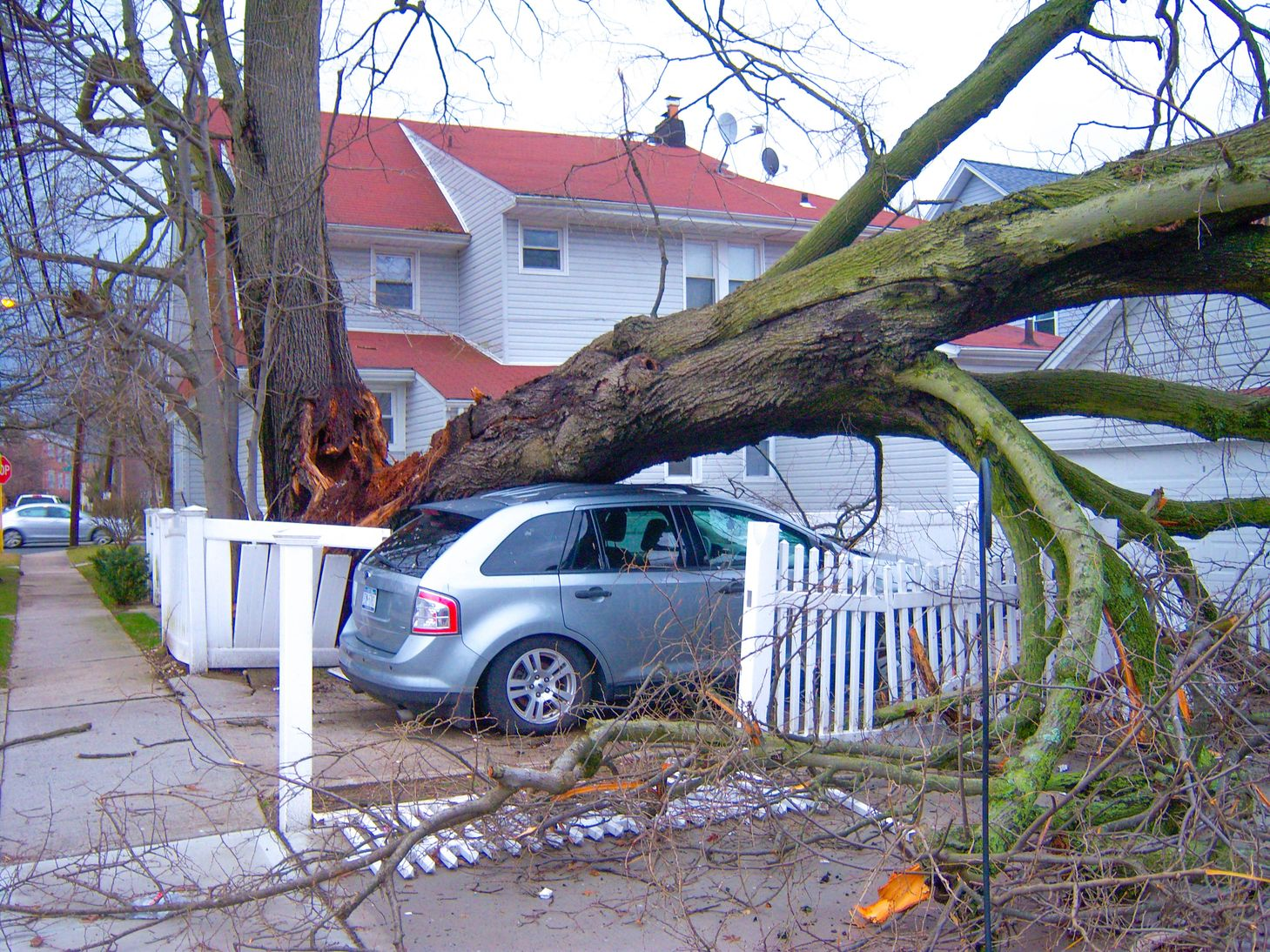 Among the benefits of an emergency fund is that it can help pay for sudden repairs to a house and vehicle damaged by a fallen tree