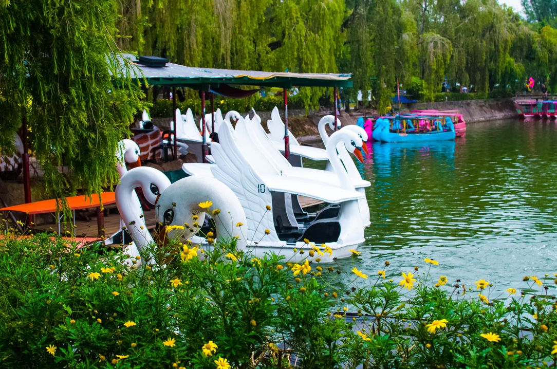 Swan boats floating along the greenish waters of Burnham Lake, one of the most scenic lakes in the Philippines