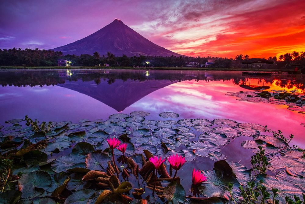 Water hyacinths float over the surface of a body of water, upon which is reflected a mountain and the sky lit by the setting sun