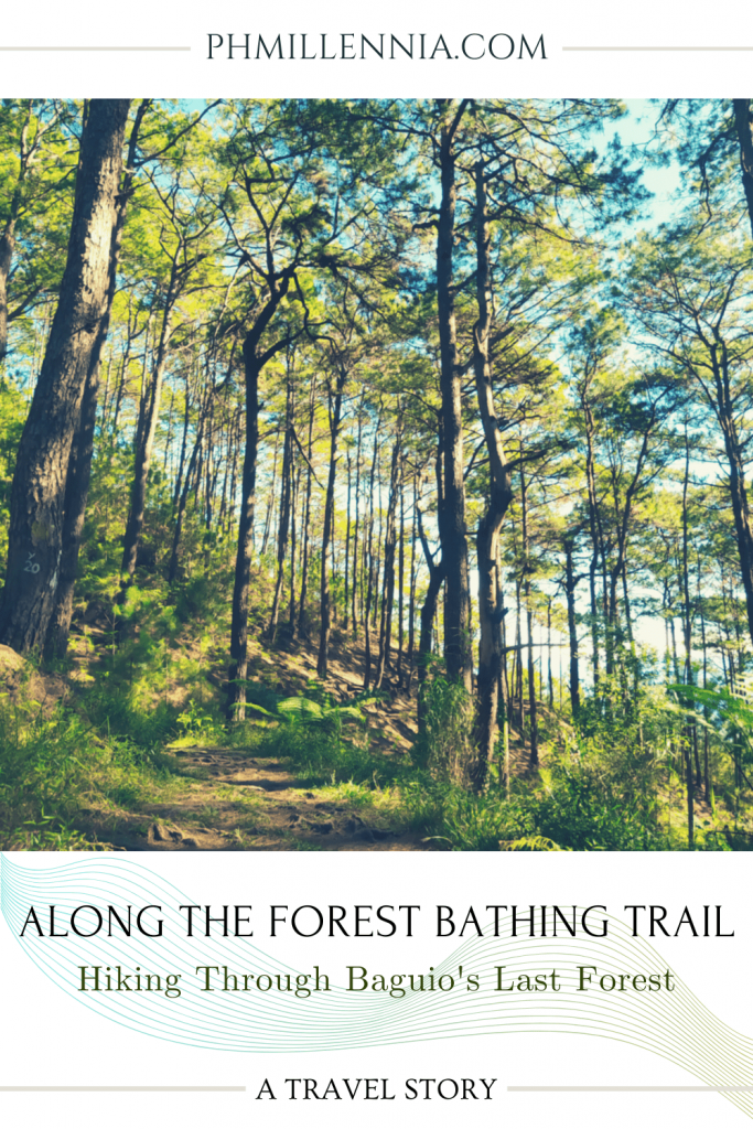 """A Pinterest graphic (pin) for the article entitled """"Along the Forest Bathing Trail: Hiking Through Baguio's Last Forest"""" by phmillennia"""