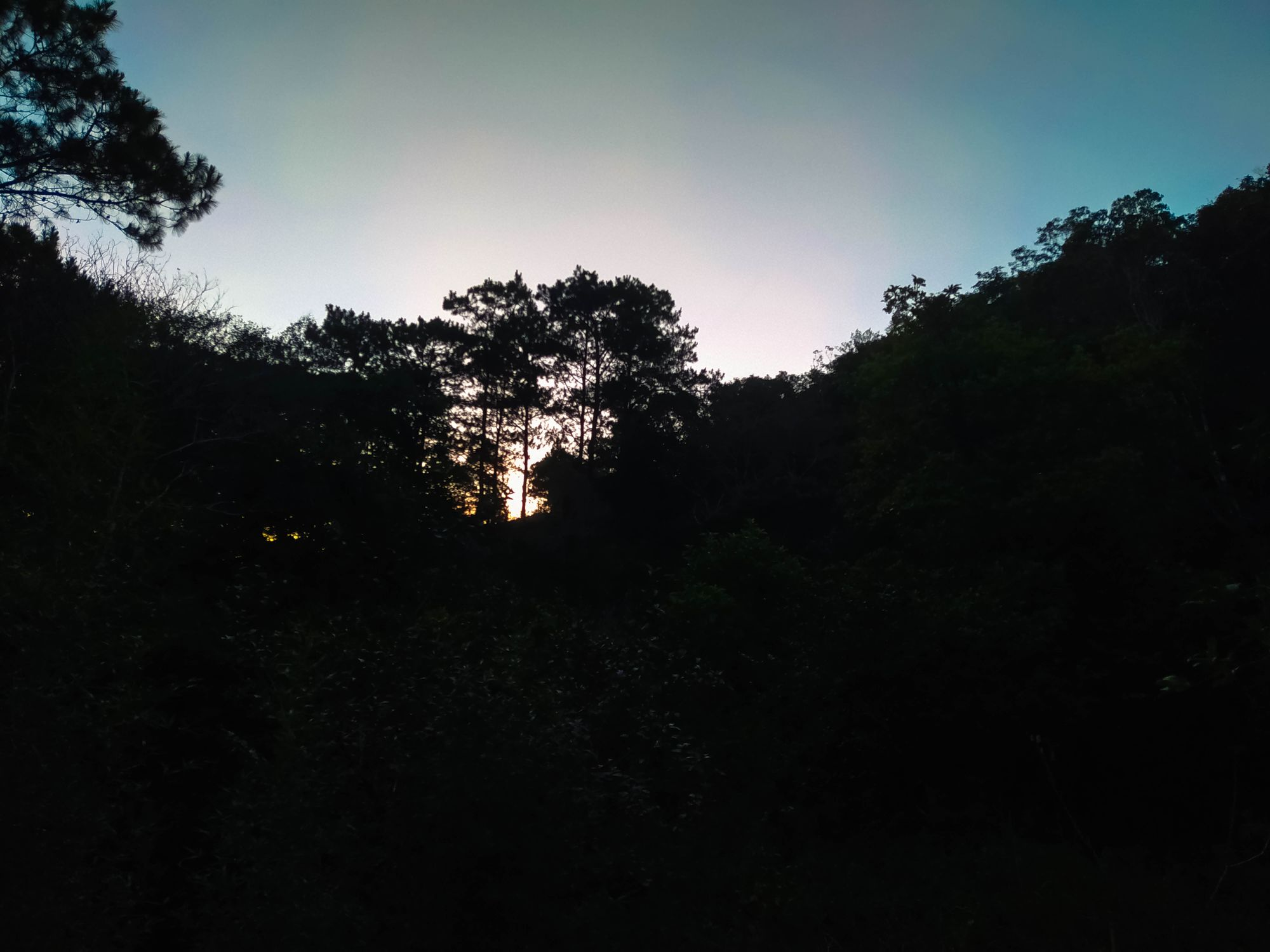 A photo of the dawn sky above a dark forest at Mount Kalugong