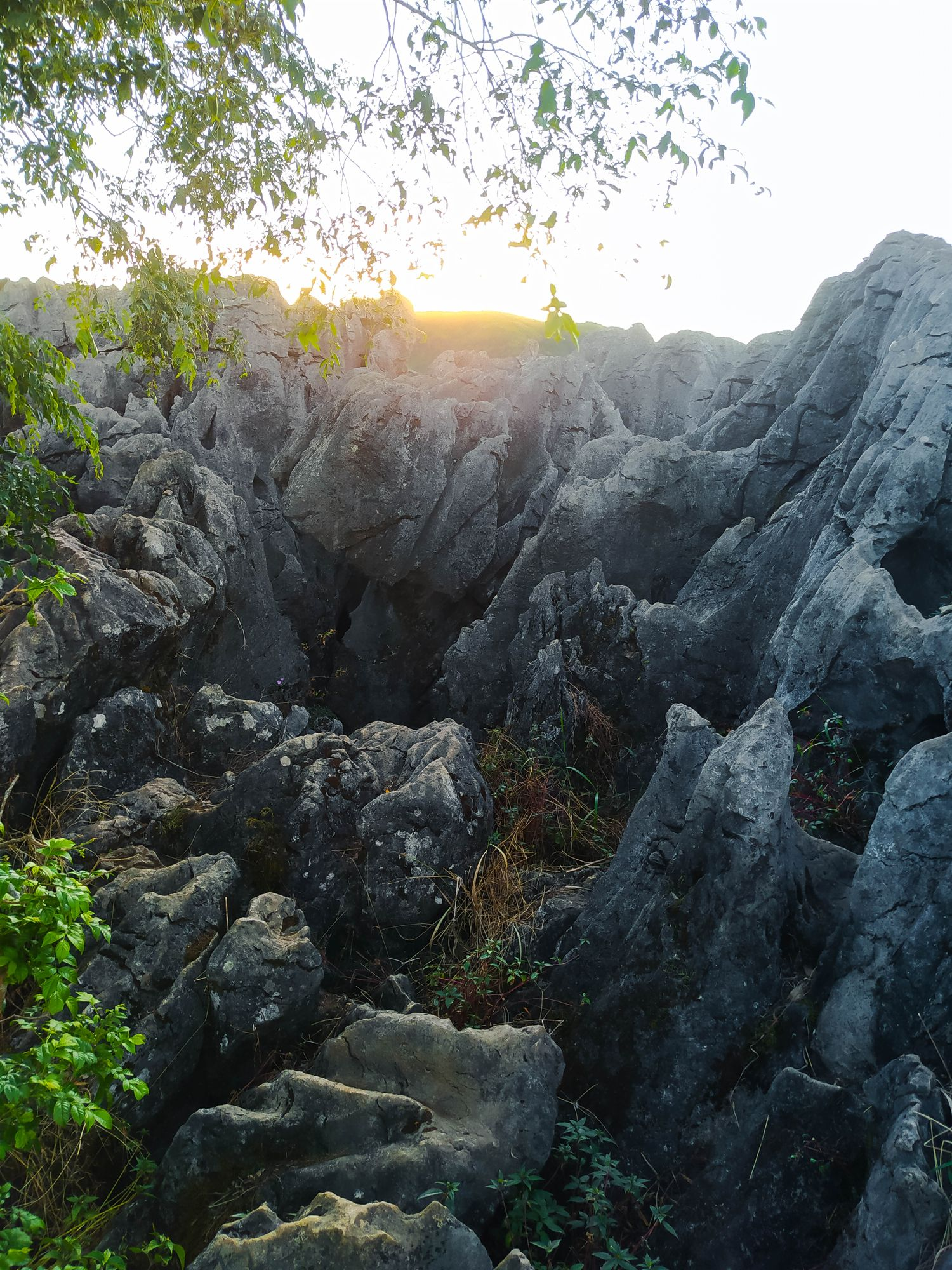 A jumble of limestone rocks interspersed with vegetation at Mount Kalugong