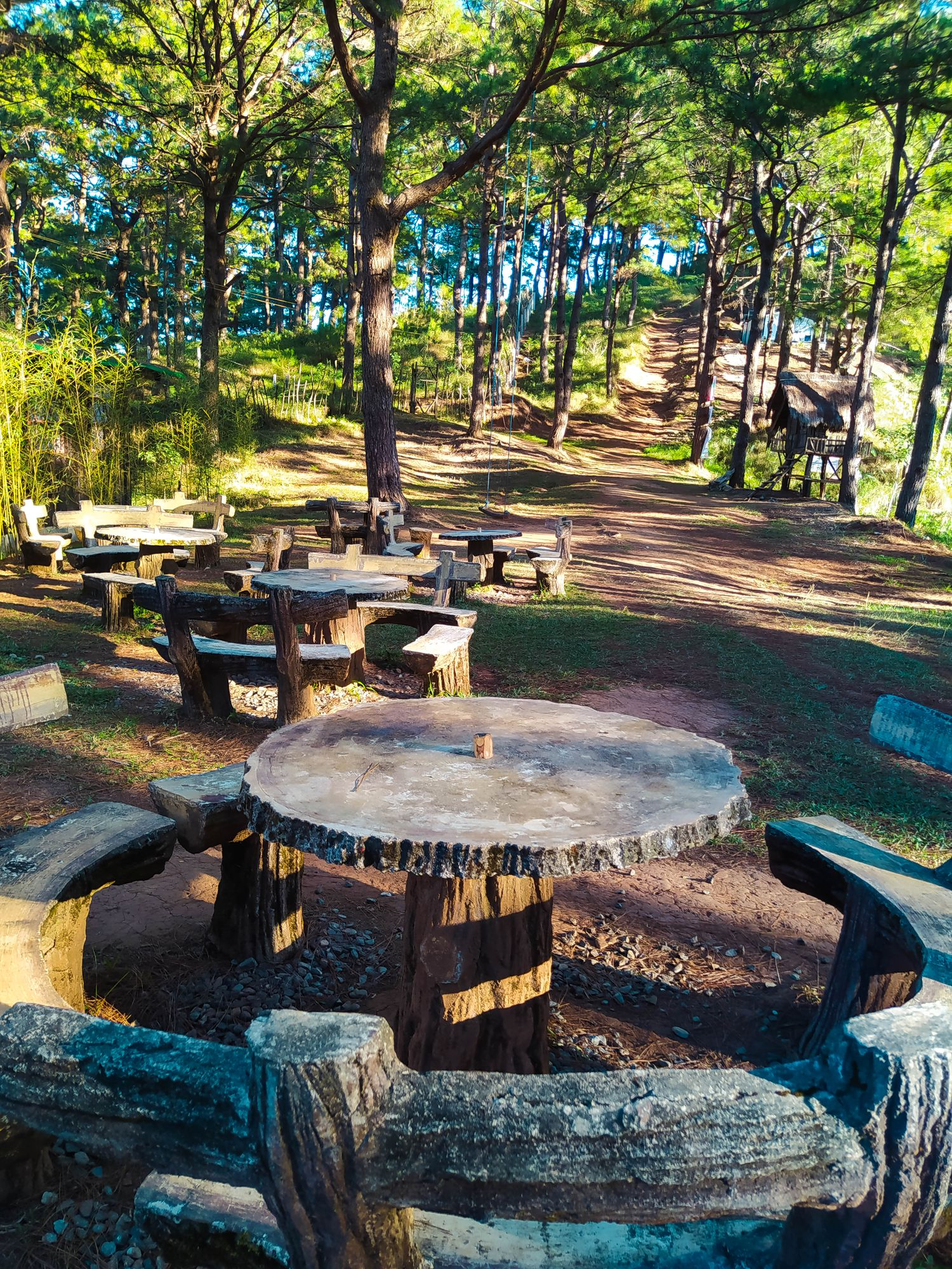 Picnic chairs and stables arrayed on a picnic area with many pine trees at Mount Kalugong