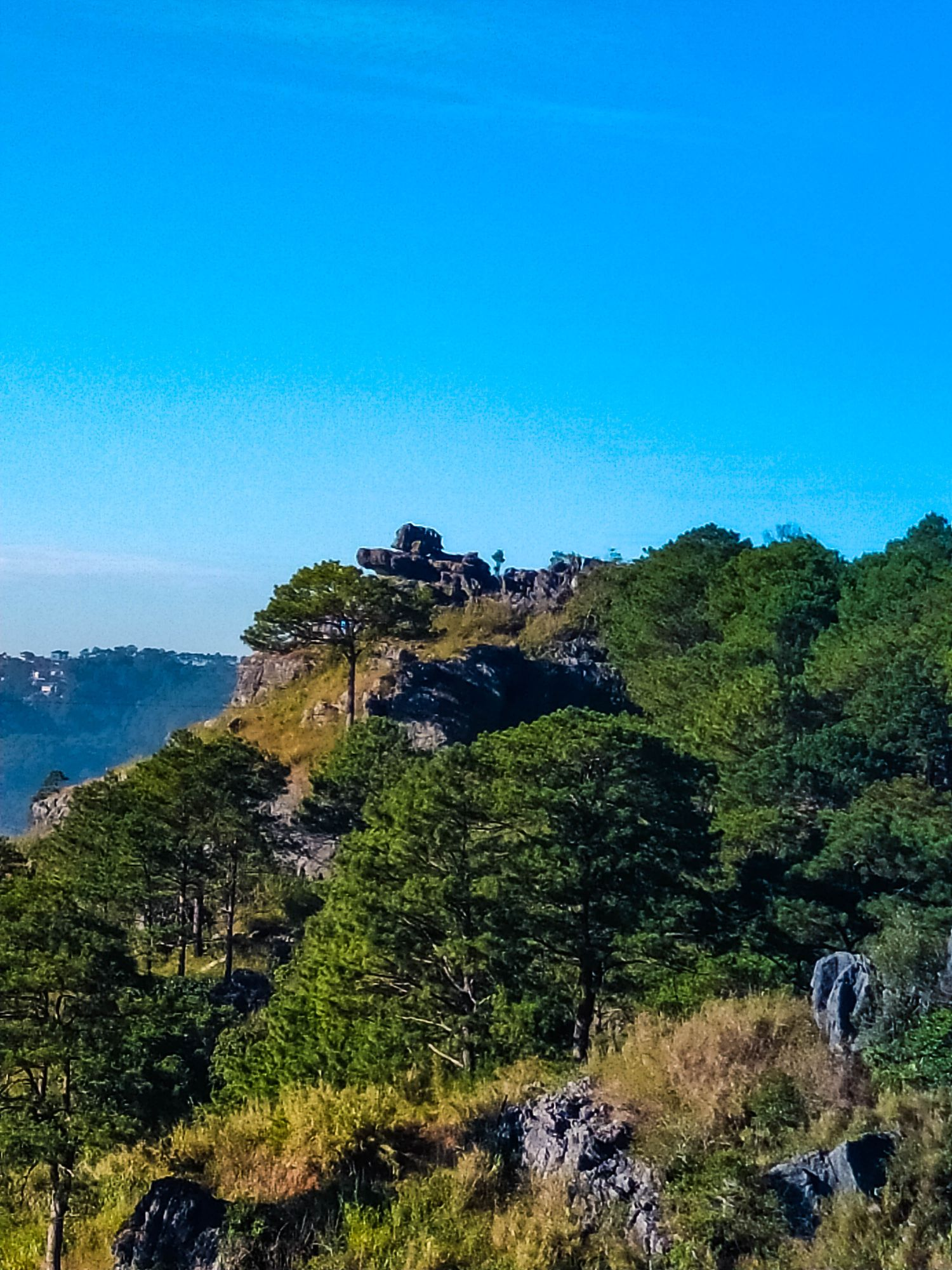 Mountain summit clad with pine trees, grass, and limestone rocks beneath a clear blue sky
