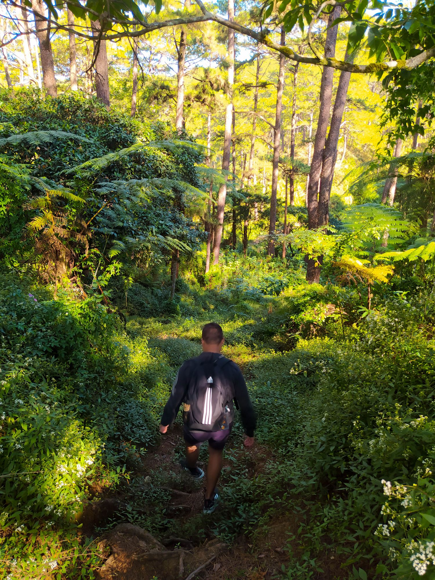 A man walking in the middle of ferns, trees, and vegetation