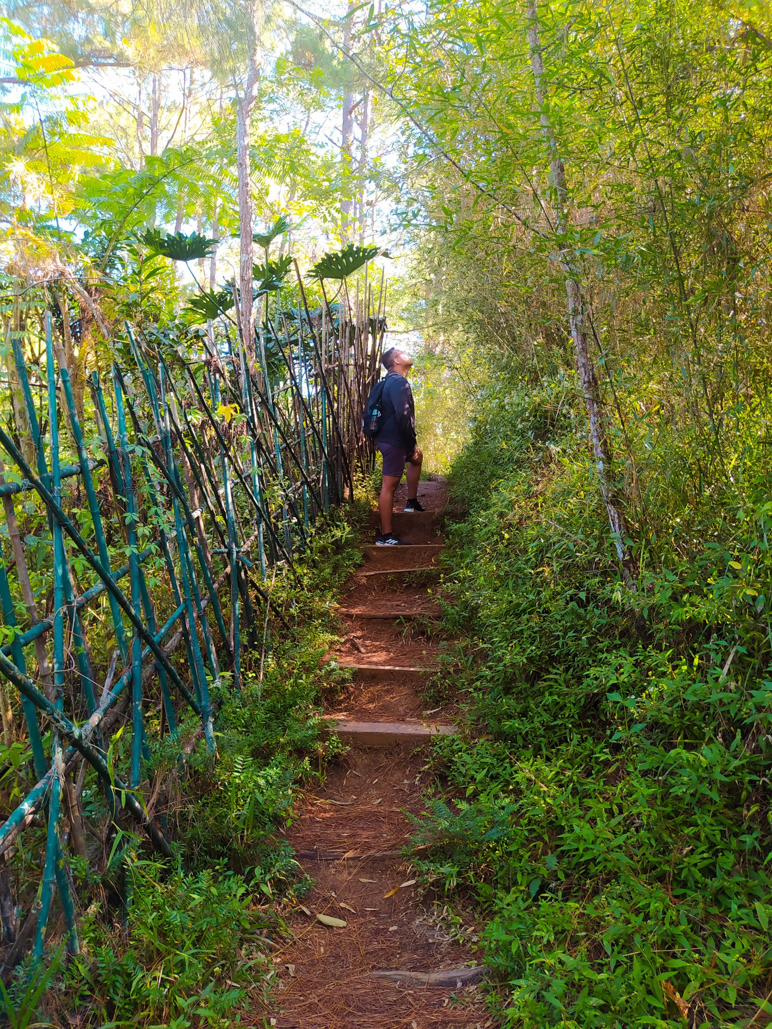 A man standing on dirt steps bounded with a stick fence on one side, and thick vegetation on both sides, somewhere along the Eco-Trail
